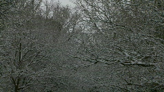 Snow covered trees above English road Stock Footage