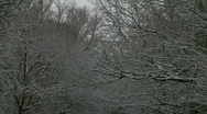 Stock Video Footage of Snow covered trees above English road