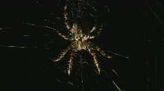 Spider sitting in web Stock Footage