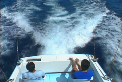 Baja fishing cruise 02 Stock Footage