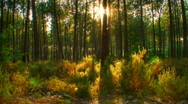 Sunset beams through trees in forest motorized hdr time lapse Stock Footage