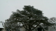 Stock Video Footage of Pan from snow covered tree to churchyard. England