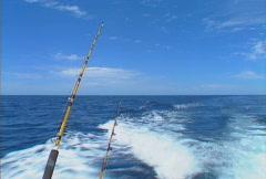 Baja fishing rods 01 Stock Footage