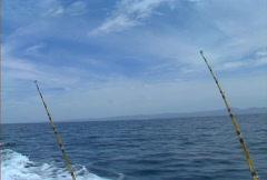 Baja fishing rods 02 Stock Footage