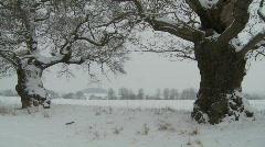 Pan across line of Oak trees in deep snow Stock Footage