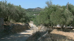 Dirt road with olive trees  Stock Footage