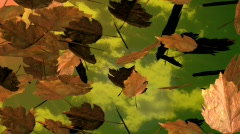 Leaves fliying in autumn Stock Footage