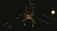 Stock Video Footage of Spider in front of streetlamp