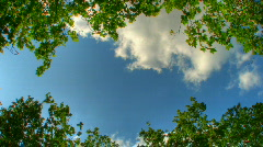Blue sky trough trees hdr time lapse Stock Footage