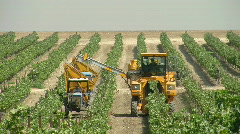 Vineyard mechanical picking 1 Stock Footage