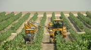 Stock Video Footage of vineyard mechanical picking 1