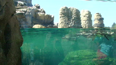 Humboldt penguins swimming and diving  896-3 Stock Footage