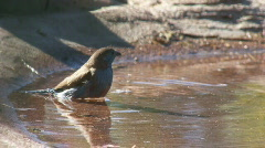 South Africa Birds 00 Stock Footage