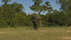 South Africa Jeep Safari 10 Elephant 06 Stock Footage