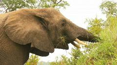 South Africa Jeep Safari 10 Elephant 05 Stock Footage