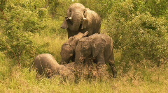 South Africa Jeep Safari 10 Elephant 03 Stock Footage