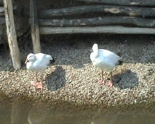 Birdies Stock Footage
