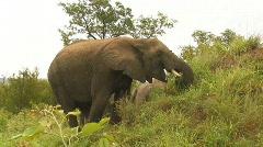 South Africa Jeep Safari 10 Elephant 07 Stock Footage
