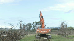 Time lapse apple tree removal  Stock Footage