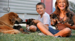 kids and pups dolly right - stock footage