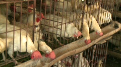 Banaue chicken battery 1 Stock Footage