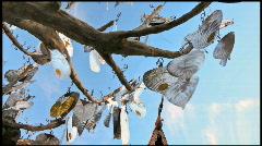 Thai silver tree  Stock Footage