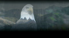 Bald Eagle and Mountains 2 Stock Footage