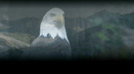 Stock Video Footage of Bald Eagle and Mountains 2