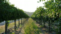 Vineyard Vines - stock footage