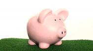 Piggy bank coin drop grass - HD  Stock Footage