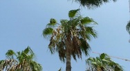 Stock Video Footage of Palm Tress