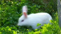 whiterabbit - stock footage