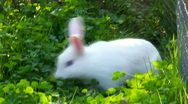 Whiterabbit Stock Footage