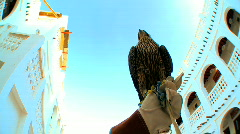 Bird of Prey - stock footage