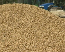 Grain on a heap Stock Footage