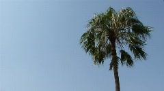 Palm Tree Single Stock Footage