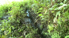 Batad water for irrigation 1 Stock Footage