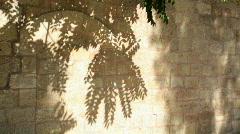 Olive_trees_01 Stock Footage