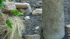 Hedgehogg Stock Footage