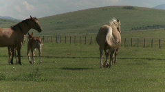 Horses and colts Stock Footage