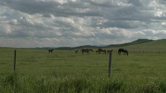 Horse and colts on the ranch Stock Footage
