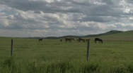 Stock Video Footage of horse and colts on the ranch