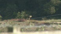 Kestrel hunts on power cable Stock Footage