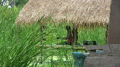 Man Playing Guitar In A Grass Hut Stock Footage