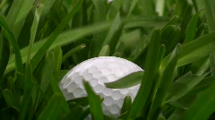 Golfball in grass closeup Stock Footage