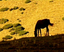 Horse 12 P Stock Footage