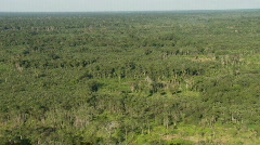 Aerial view of the amazon jungle Stock Footage