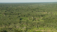Stock Video Footage of Aerial view of the amazon jungle