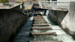 fish ladder at Bonneville Dam - stock footage