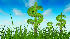 Growing dollar trees in the grass Stock Footage